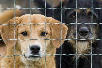 Un gagnant au casino offre 20 000 CHF à un refuge animalier