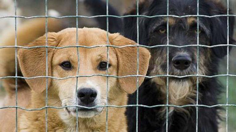 Refuge animalier